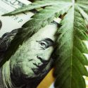Form 8300 and the Marijuana Industry